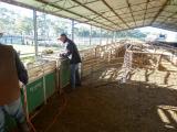 Classing for Andres-Kangaroo Inn